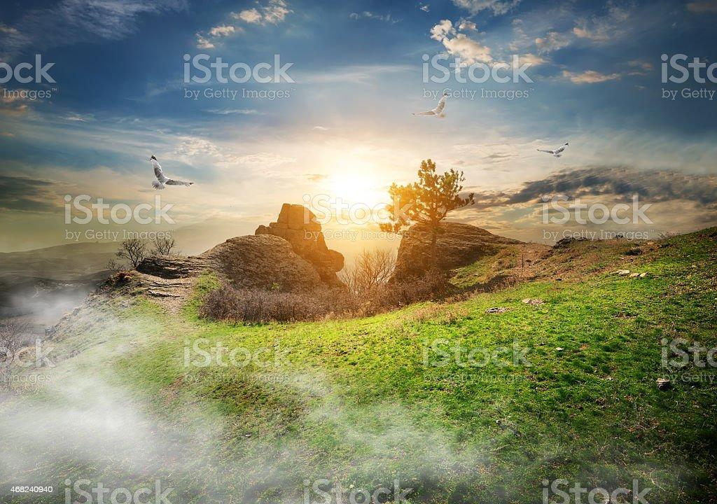 Meadow on mountain stock photo