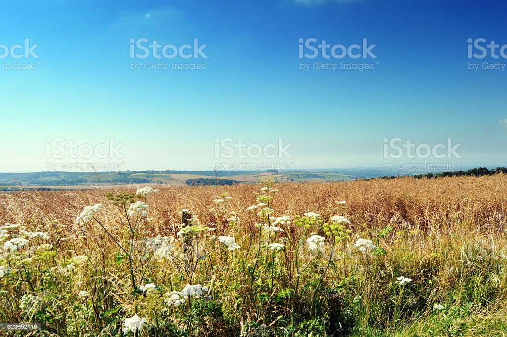 Meadow on South Downs, UK stock photo