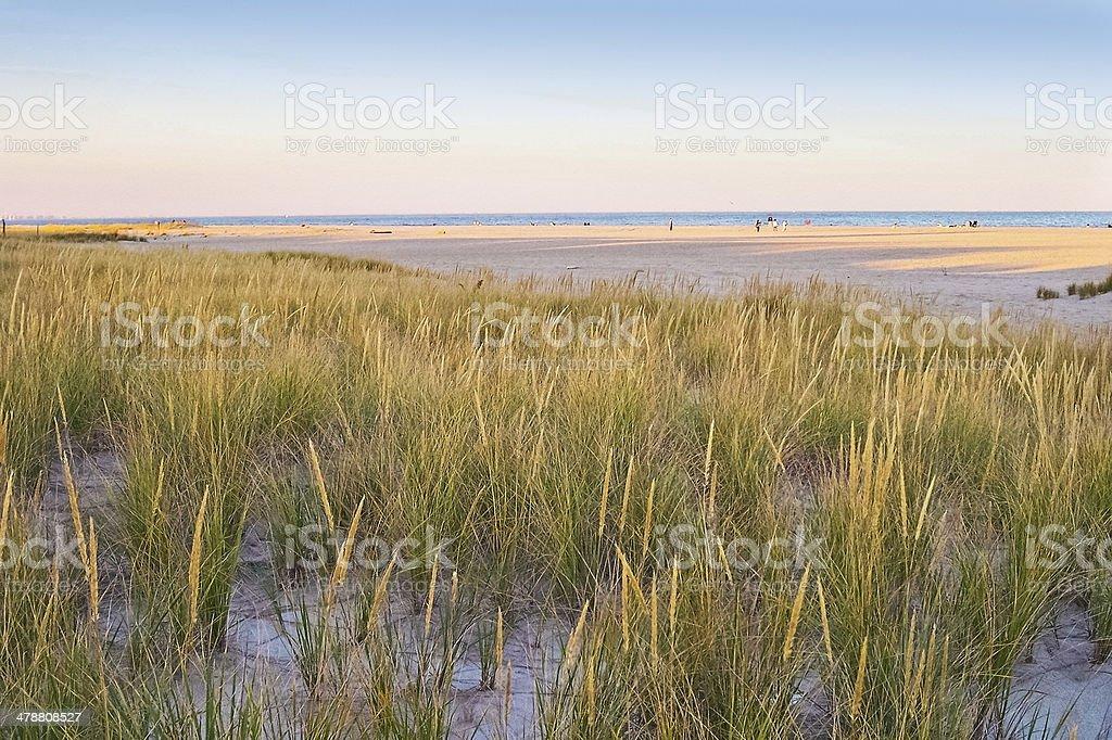 Meadow on the Beach stock photo
