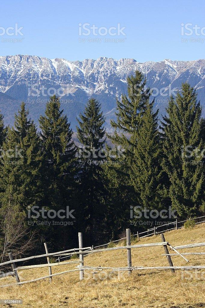 Meadow on the mountain royalty-free stock photo