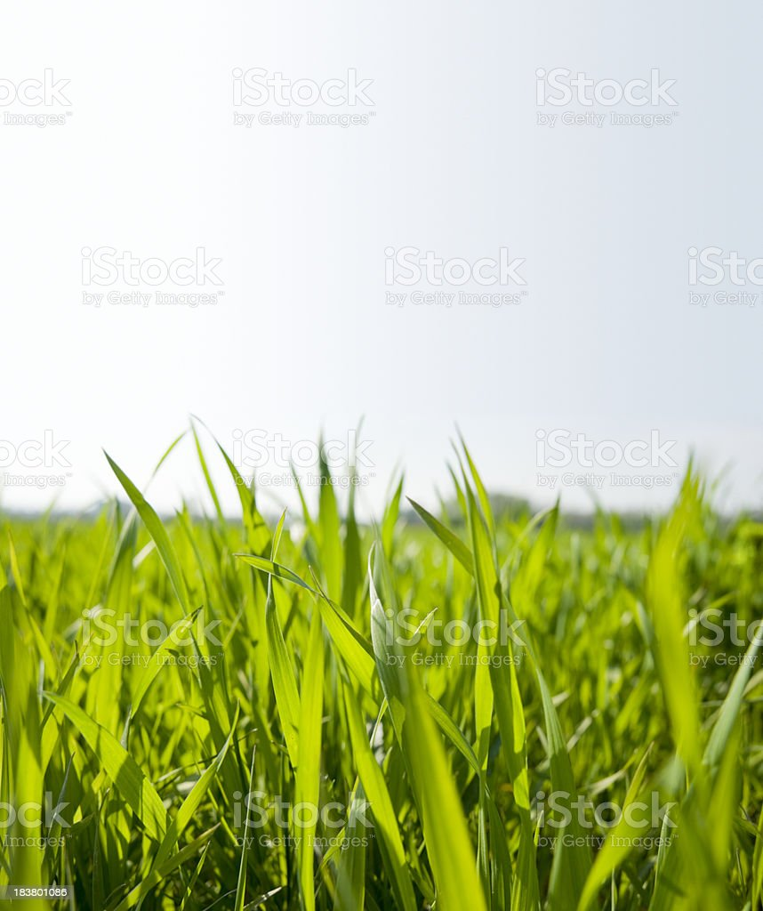 Meadow  (image size XXXL) royalty-free stock photo