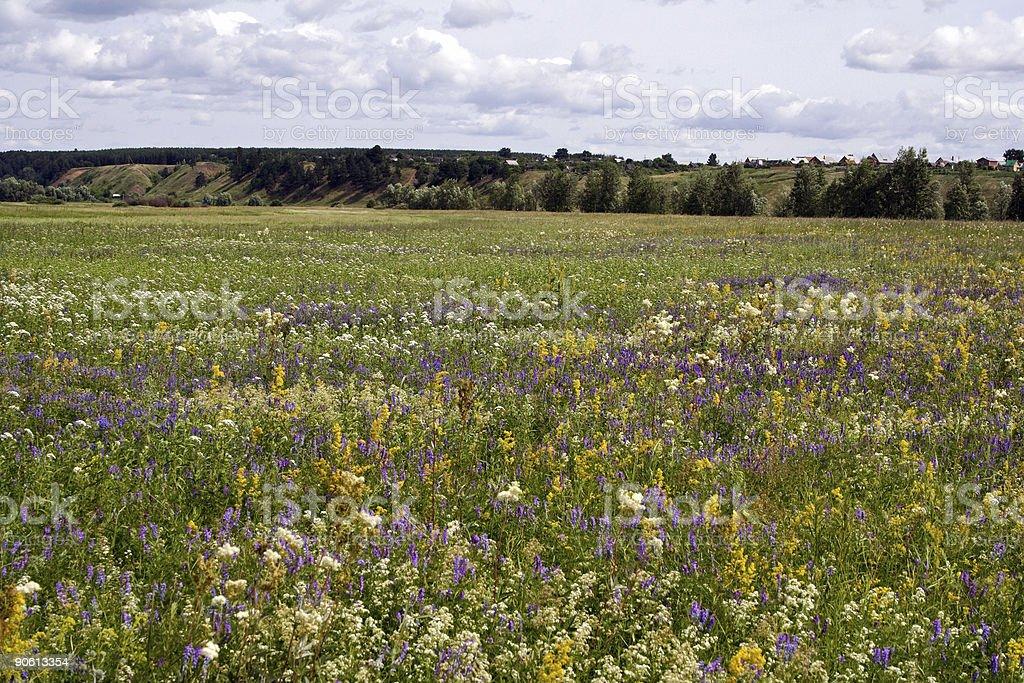 Meadow foto royalty-free