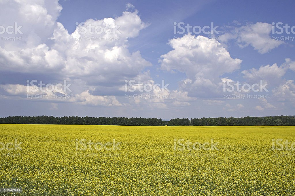 Meadow foto royalty-free