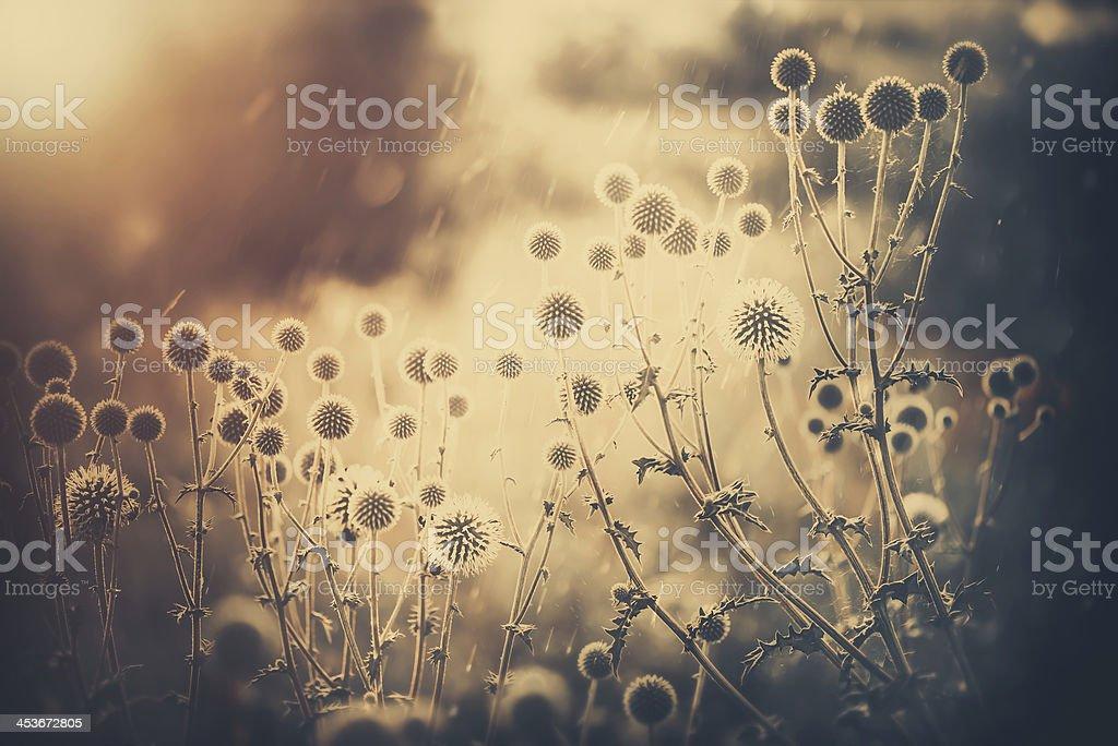 meadow plants royalty-free stock photo