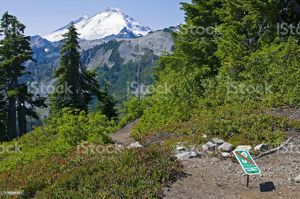 Meadow repair and Mt. Baker in Washington state royalty-free stock photo