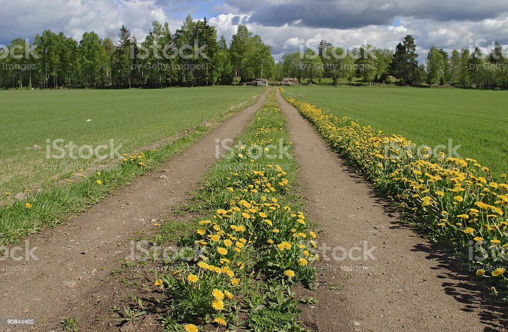 Meadow road royalty-free stock photo
