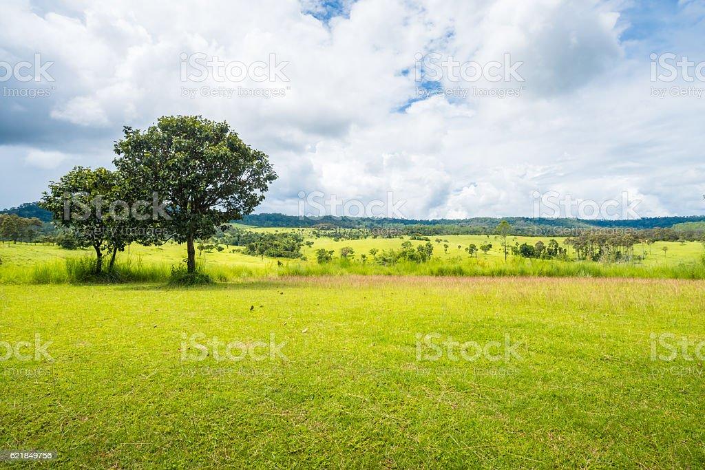 meadow savanna landscape stock photo