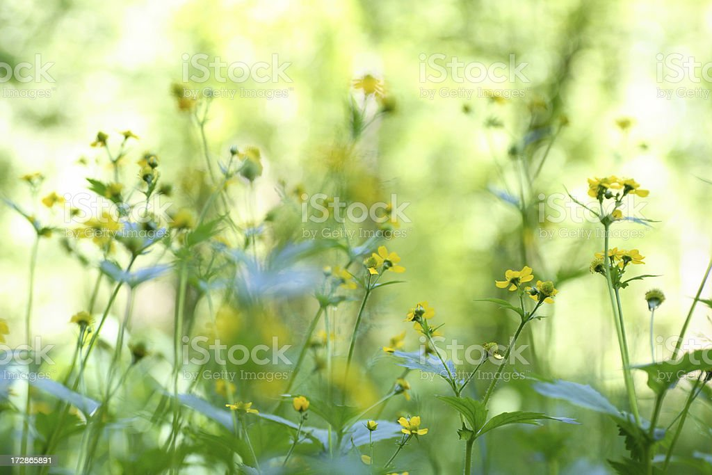 Meadow series royalty-free stock photo