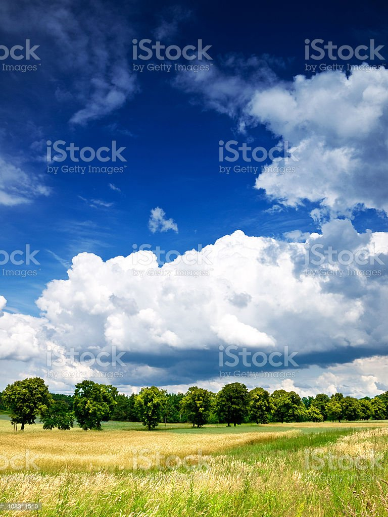 meadow sky and trees royalty-free stock photo