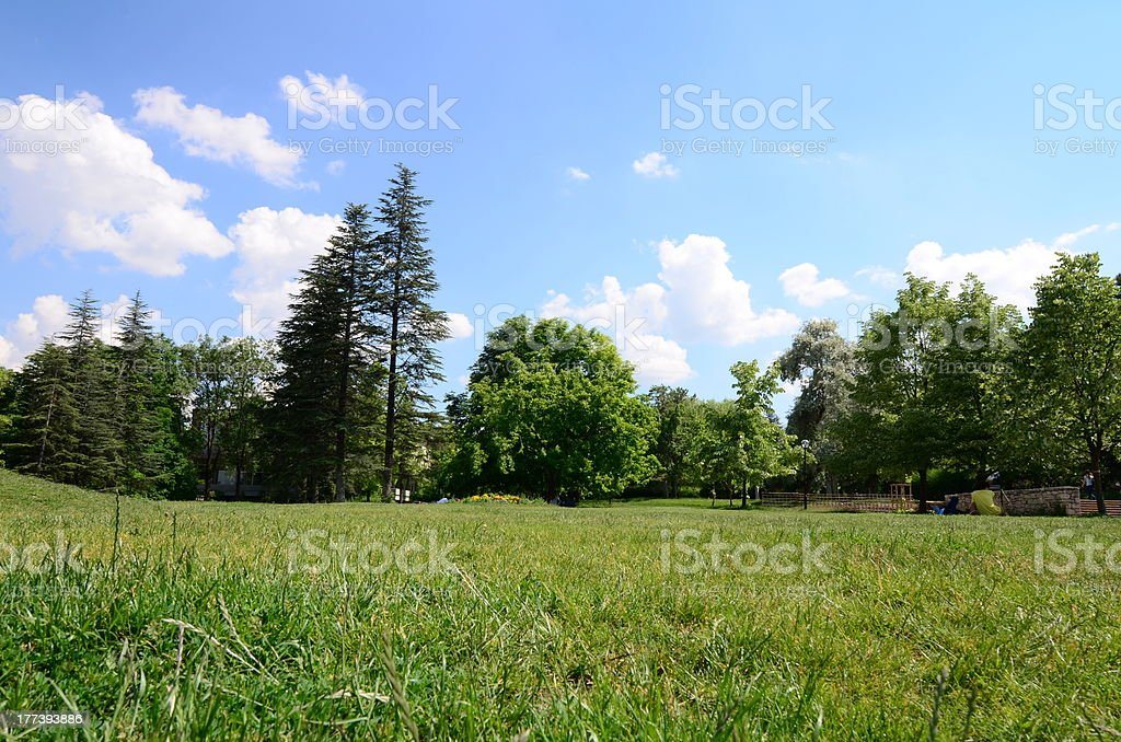 meadow surrounded by trees stock photo