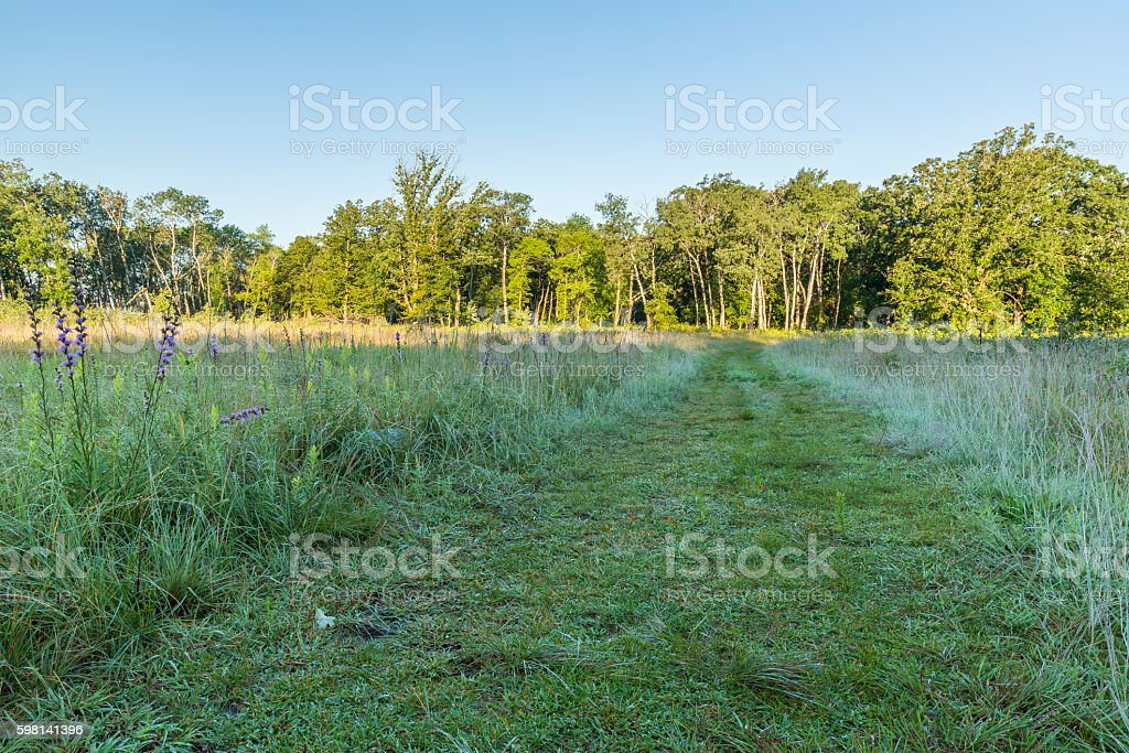 Meadow Trail To Woods stock photo