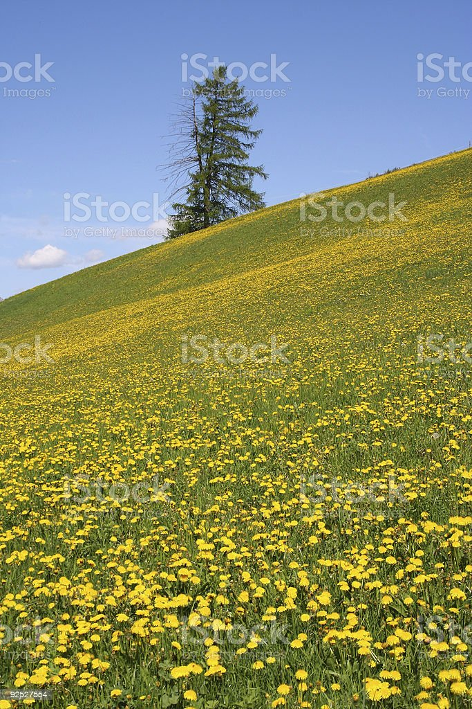 meadow & tree 02 royalty-free stock photo