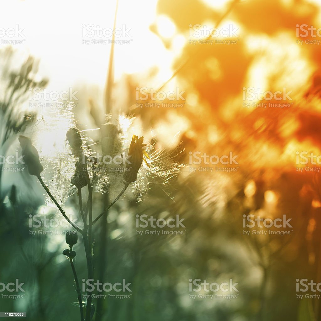 Meadow Vibrant colors royalty-free stock photo