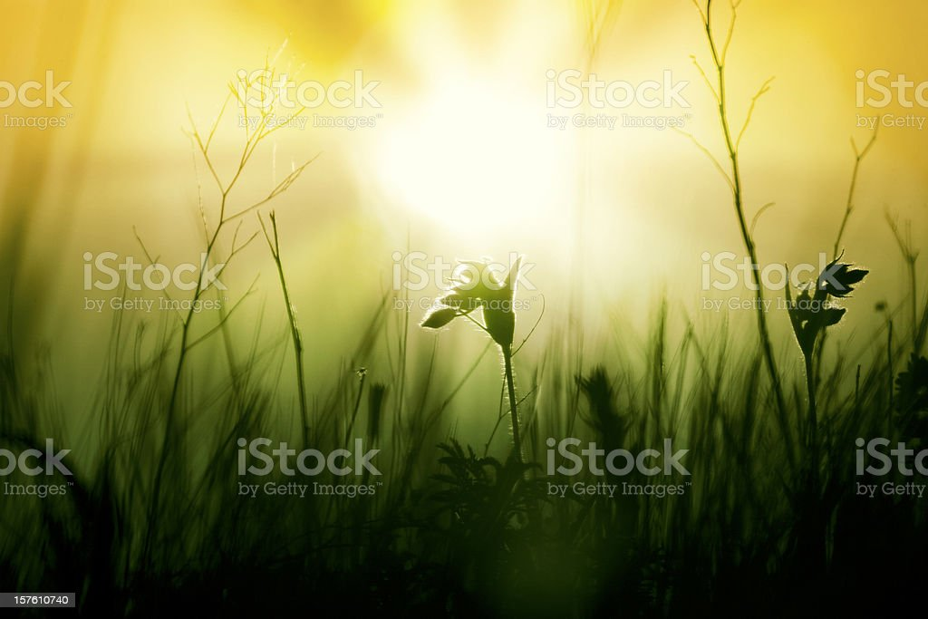 Meadow Wildflowers and grass at sunrise royalty-free stock photo