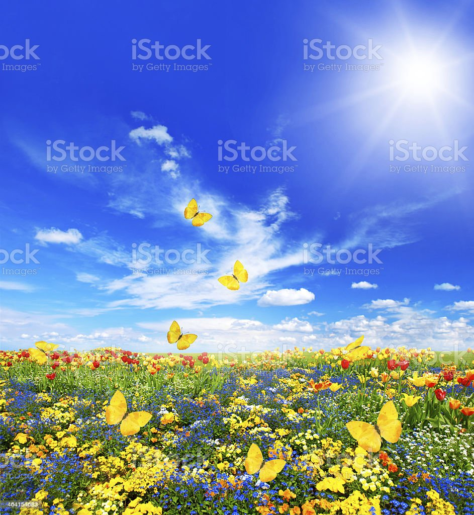 meadow with assorted flowers and butterflies stock photo