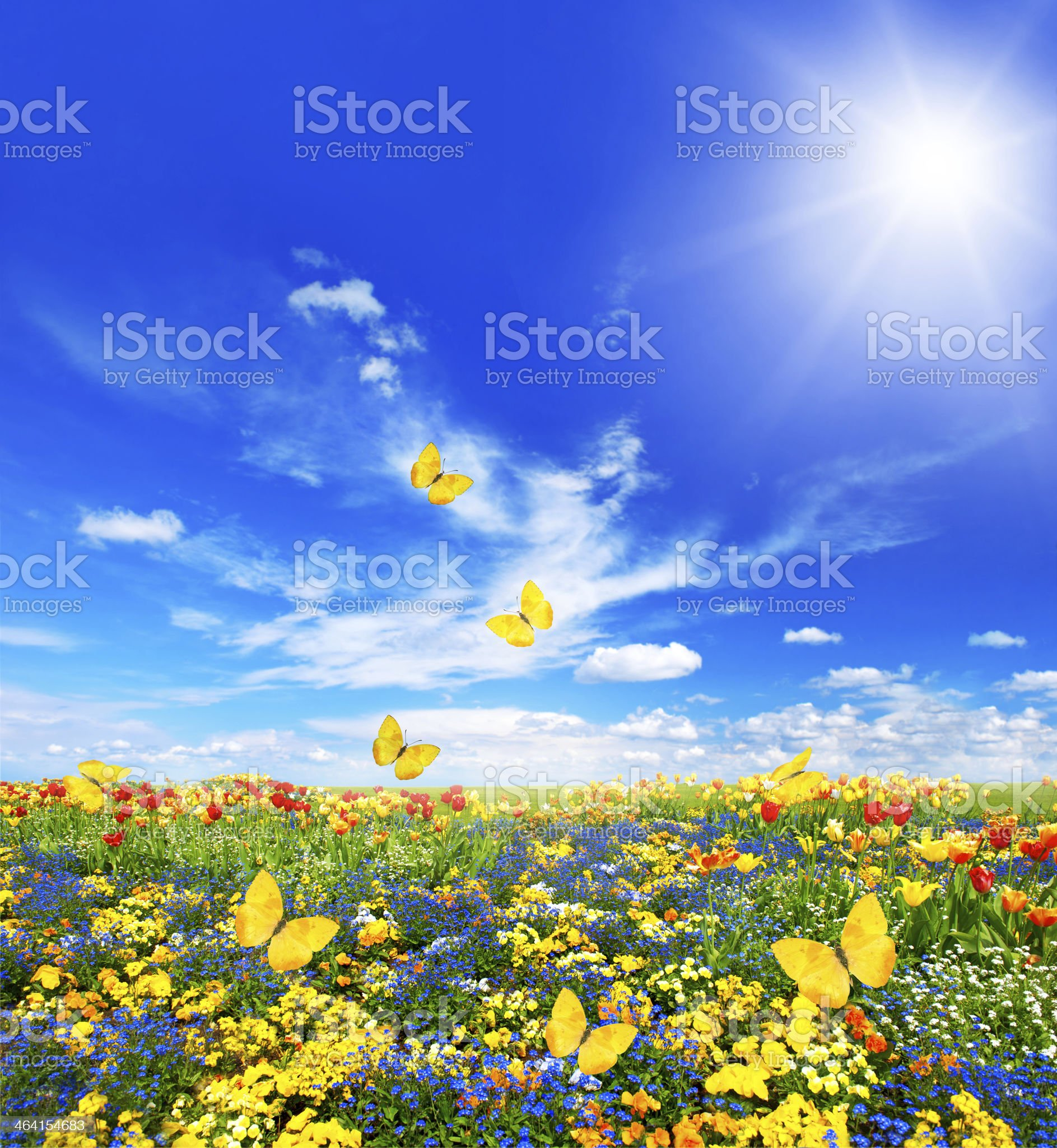 meadow with assorted flowers and butterflies royalty-free stock photo