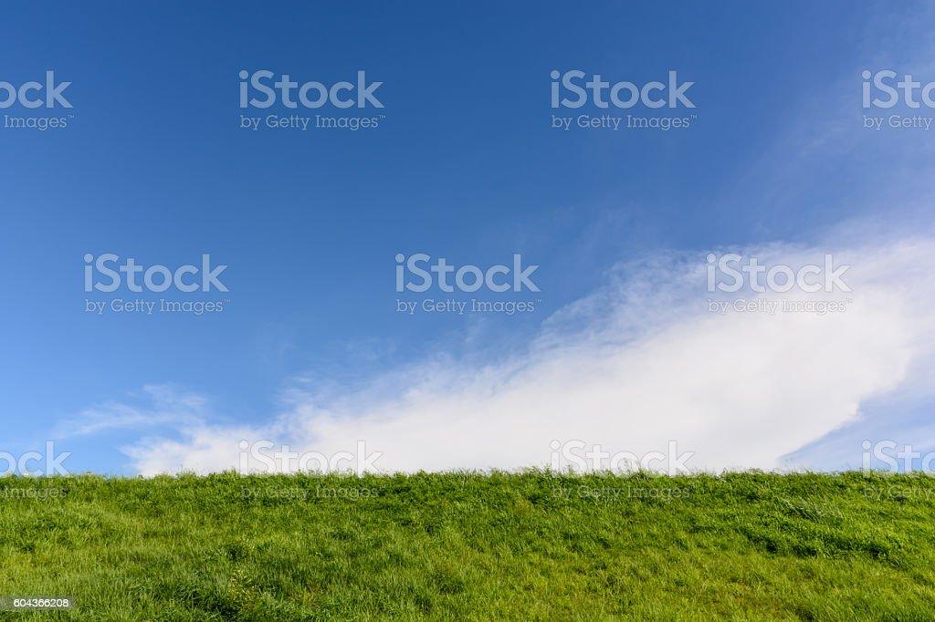 Meadow with bule sky stock photo