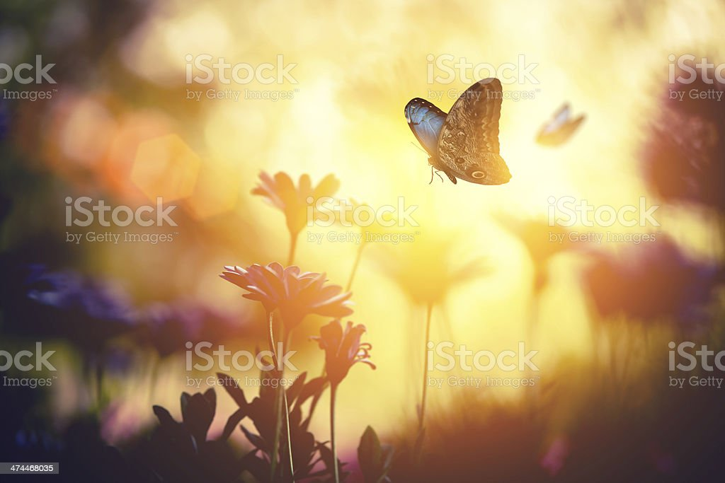 Meadow with Butterflies stock photo