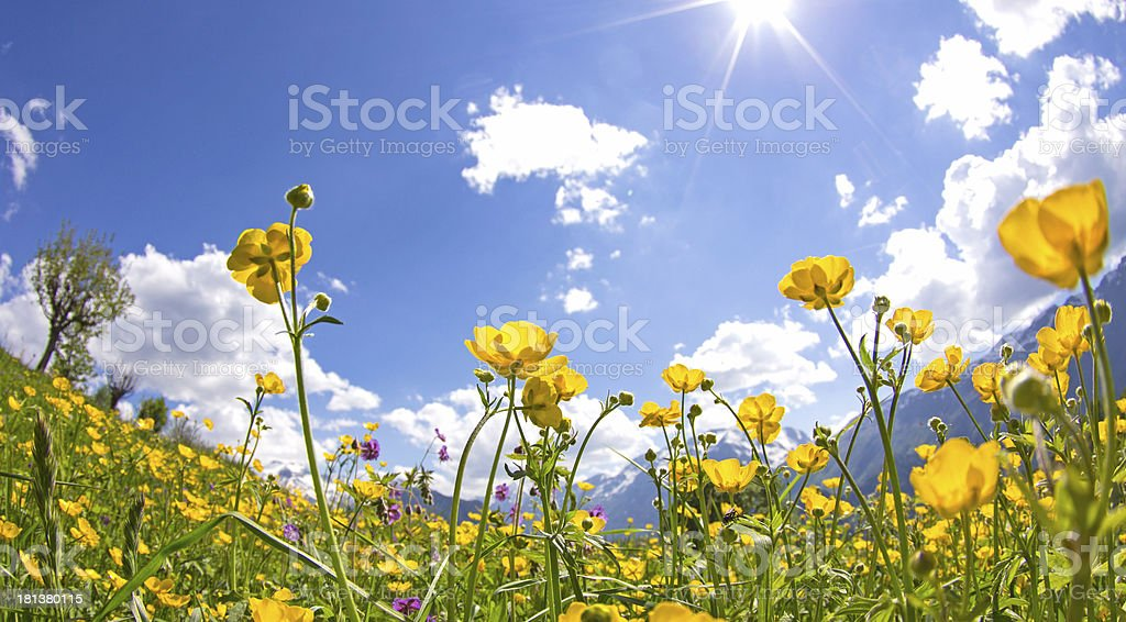Meadow with flower, wildflower. stock photo