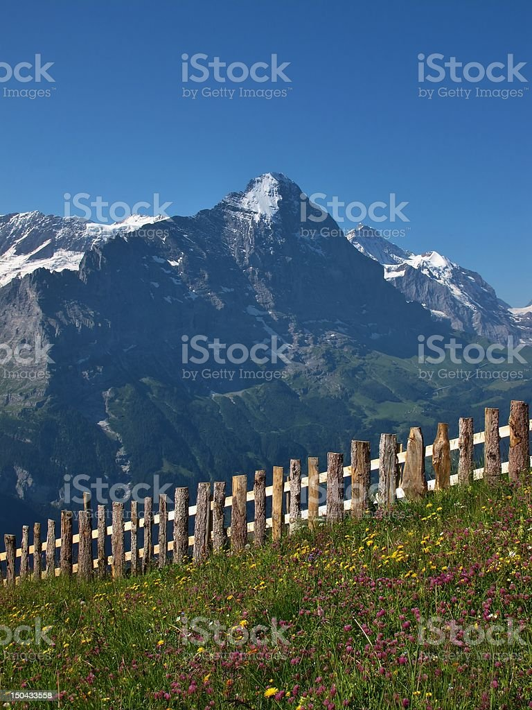 Meadow With Flowers In Front Of The Eiger stock photo