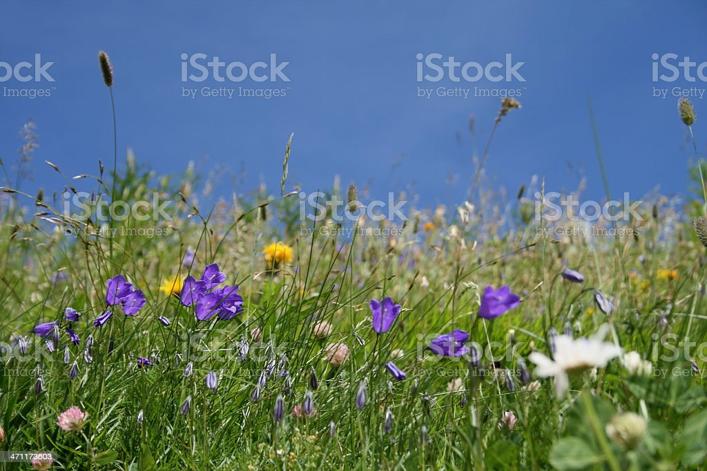 Meadow with flowers stock photo