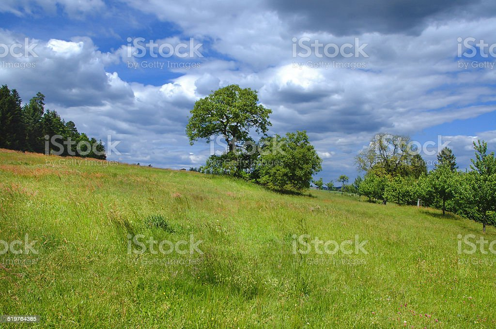 Meadow with fruit trees at the edge of the woods royalty-free stock photo