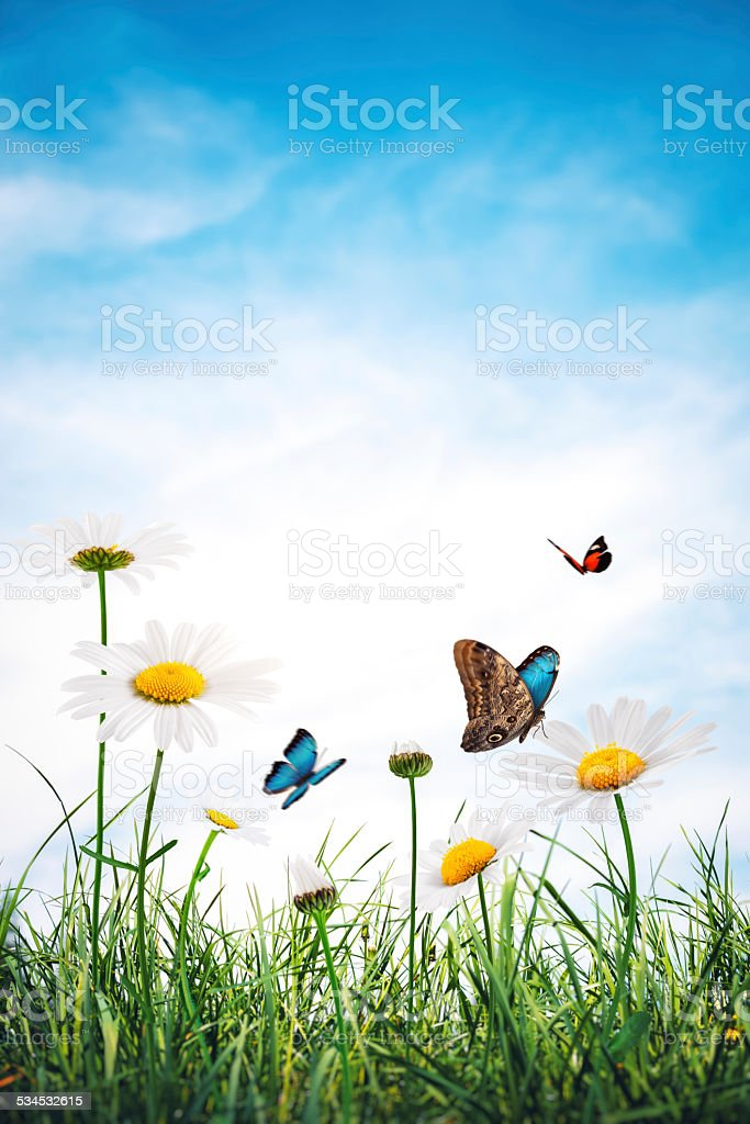 Meadow With Golden Daisies and Butterflies stock photo