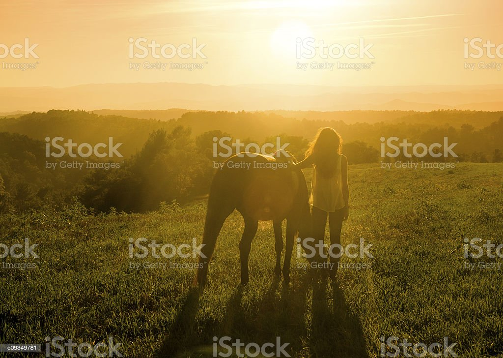 Meadow with Horse stock photo