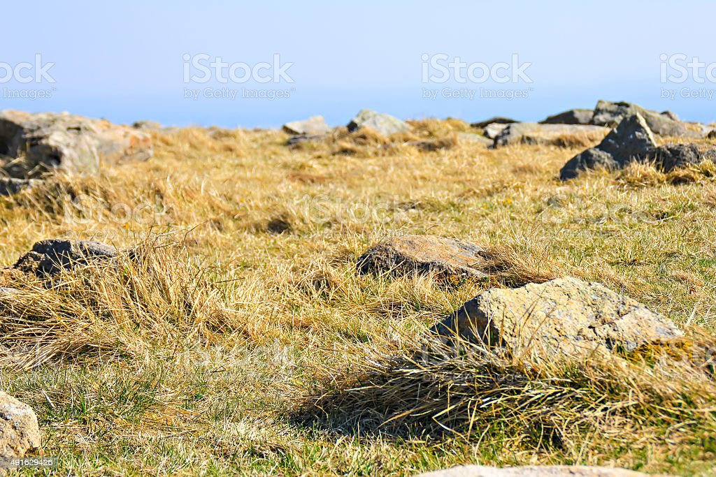 Meadow with stones in Harz stock photo