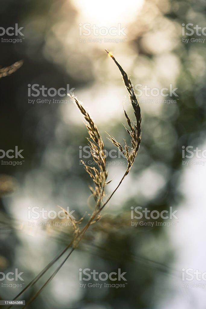 Meadow with sunlight royalty-free stock photo