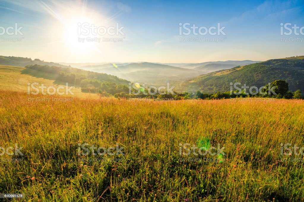 meadow with tall grass in mountains at sunrise stock photo