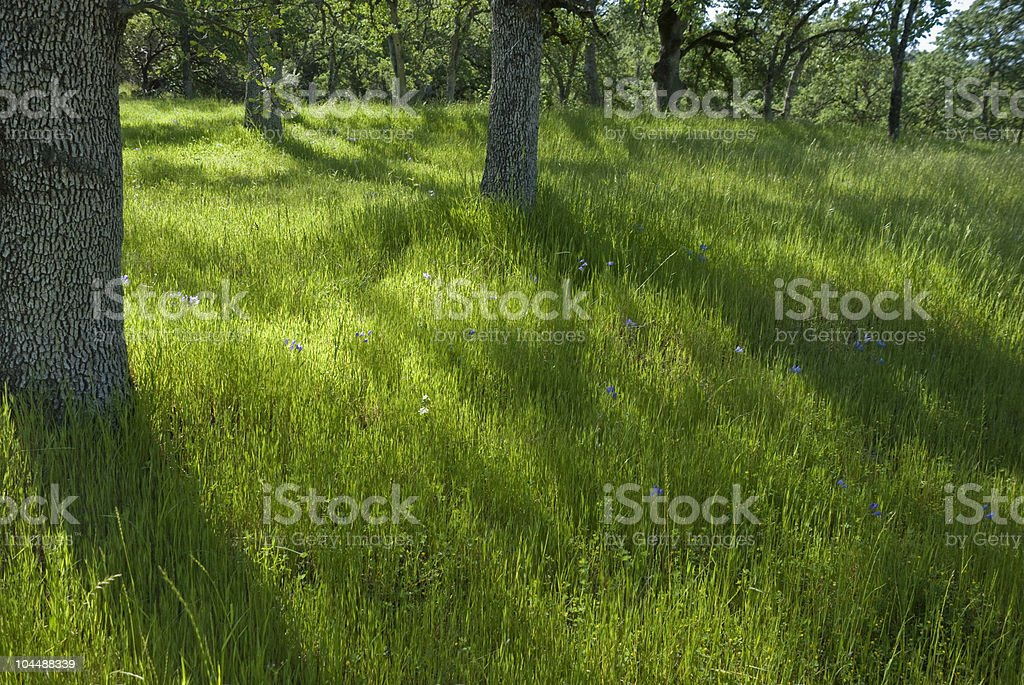 Meadow with Trees and Wildflowers royalty-free stock photo