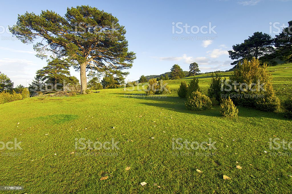 meadow with trees stock photo