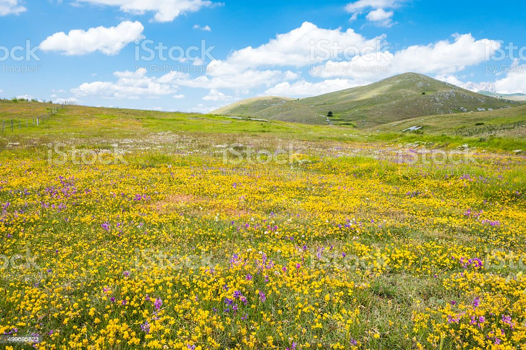 Meadow with wild flowers near Campo Imperatore, Abruzzi Italy royalty-free stock photo