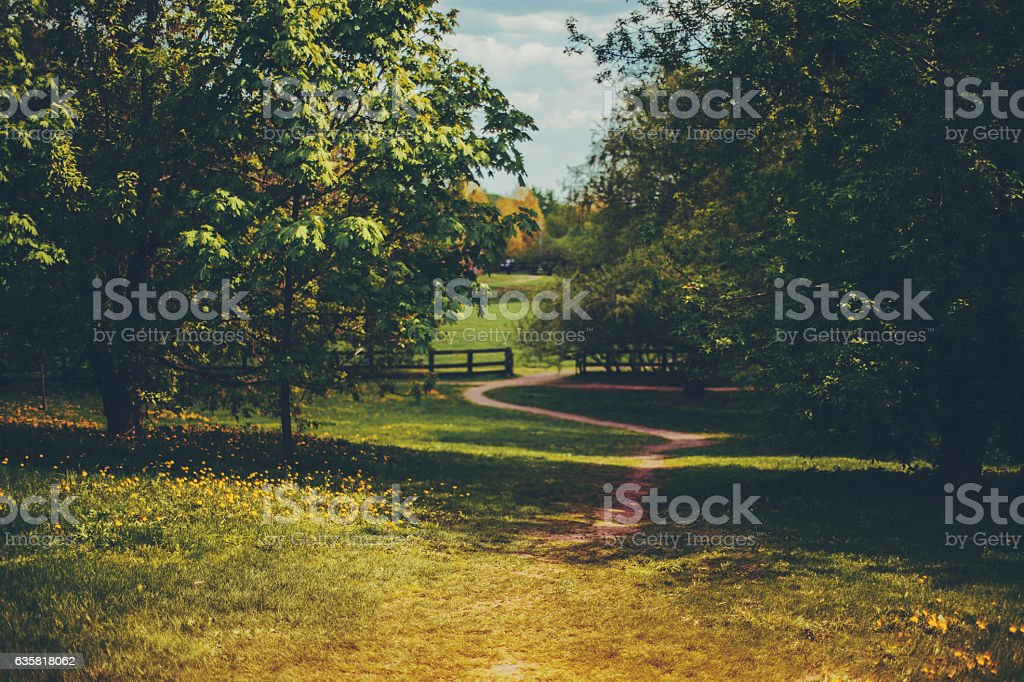 Meadow with wooden fence in distance stock photo