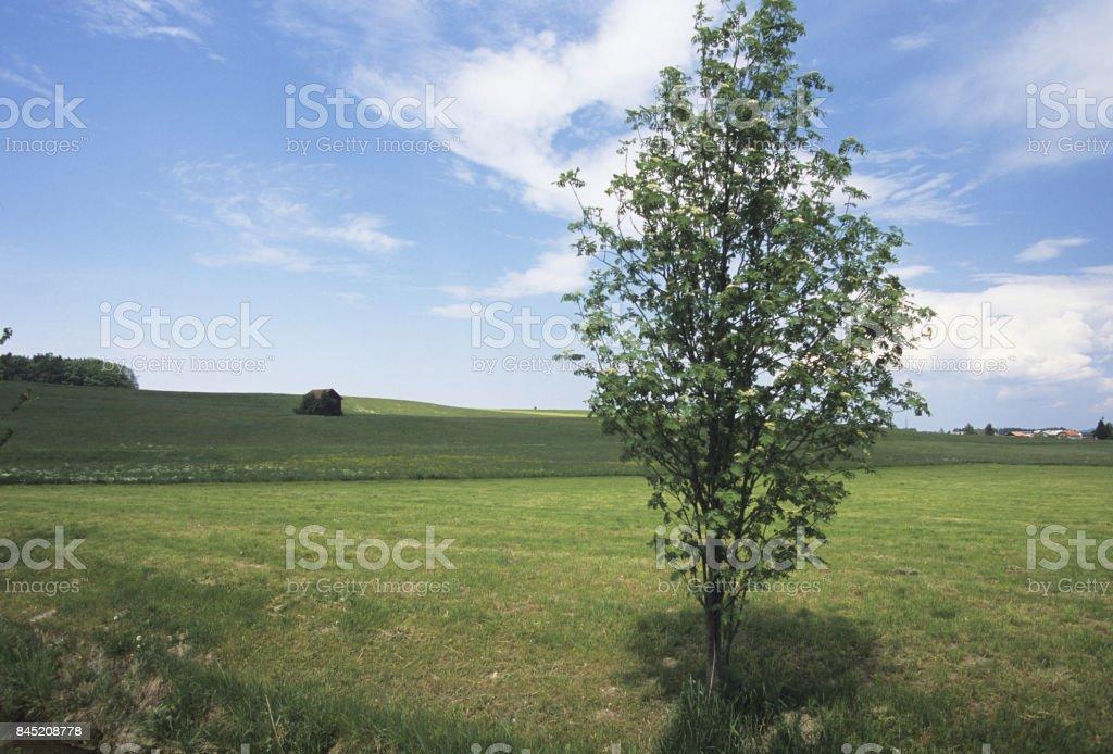 Meadow wood stock photo