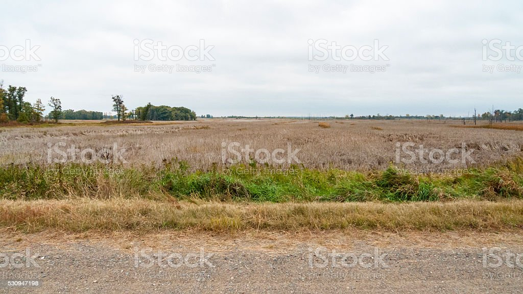 Meadowland in Sherburne National Wildlife Refuge stock photo