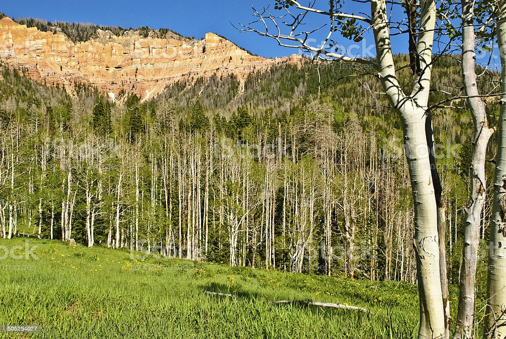 Meadows and Aspen Trees in Spring below Cedar Canyon Utah stock photo