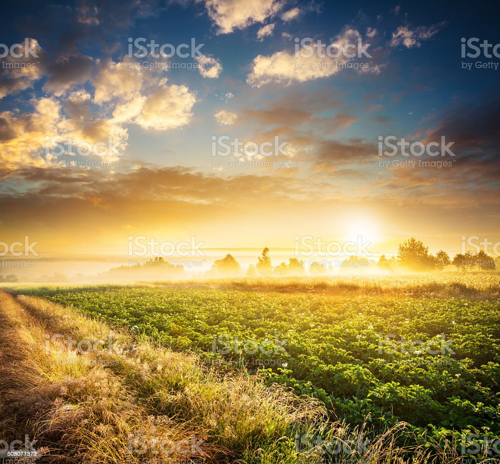 Meadows and Fields During Foggy Sunset - Farmland Landscape stock photo