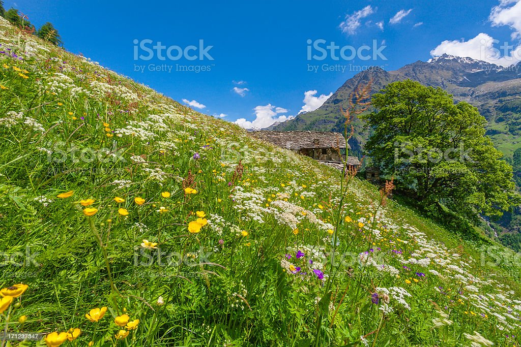 Meadows in flower, Gressoney Valley, Italy stock photo