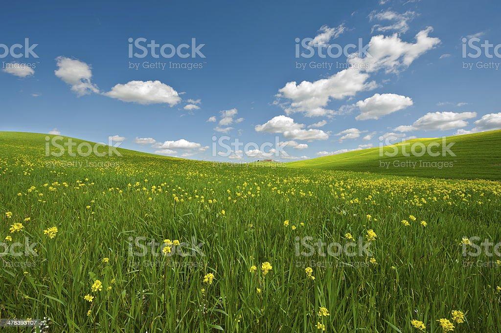 Meadows of Tuscany stock photo