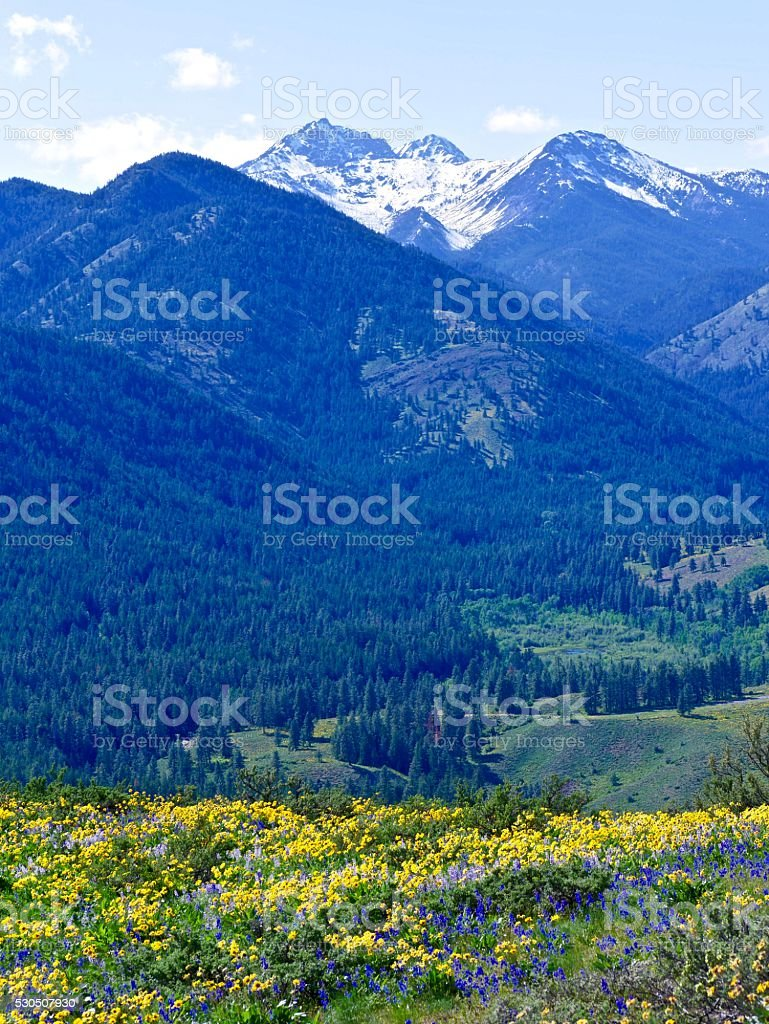 Meadows with Wild Flowers and Snow Capped Mountains. stock photo