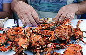 Meal of fresh steamed crabs