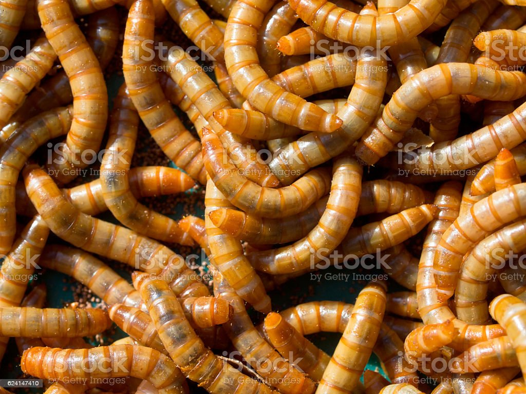 Mealworm abstract close up stock photo