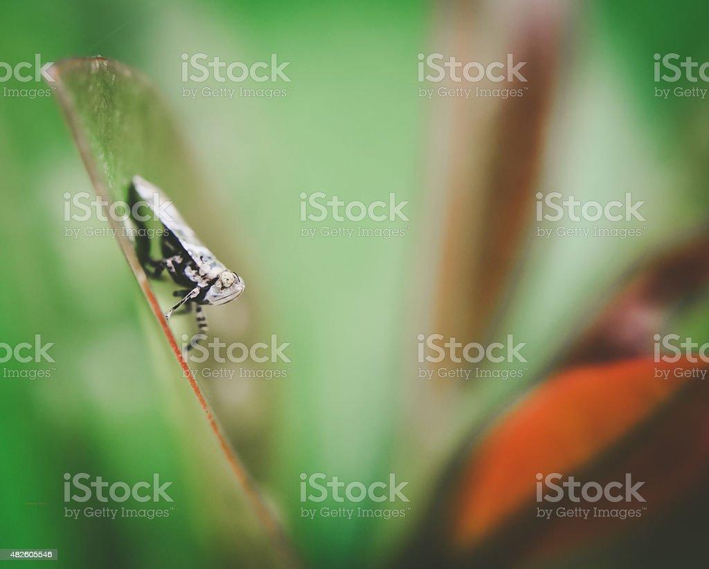 Mealy bug on leaf stock photo