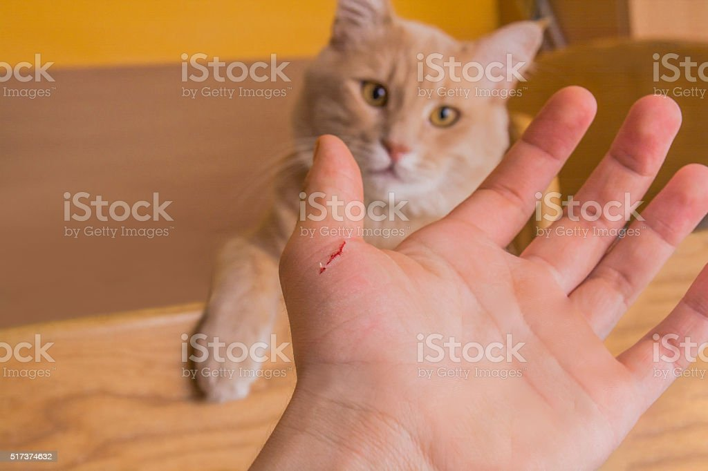 Mean Cat stock photo