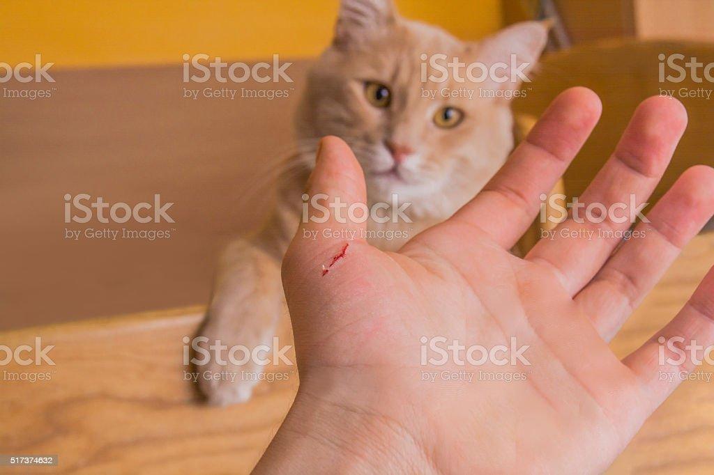 Mean Cat stock photo