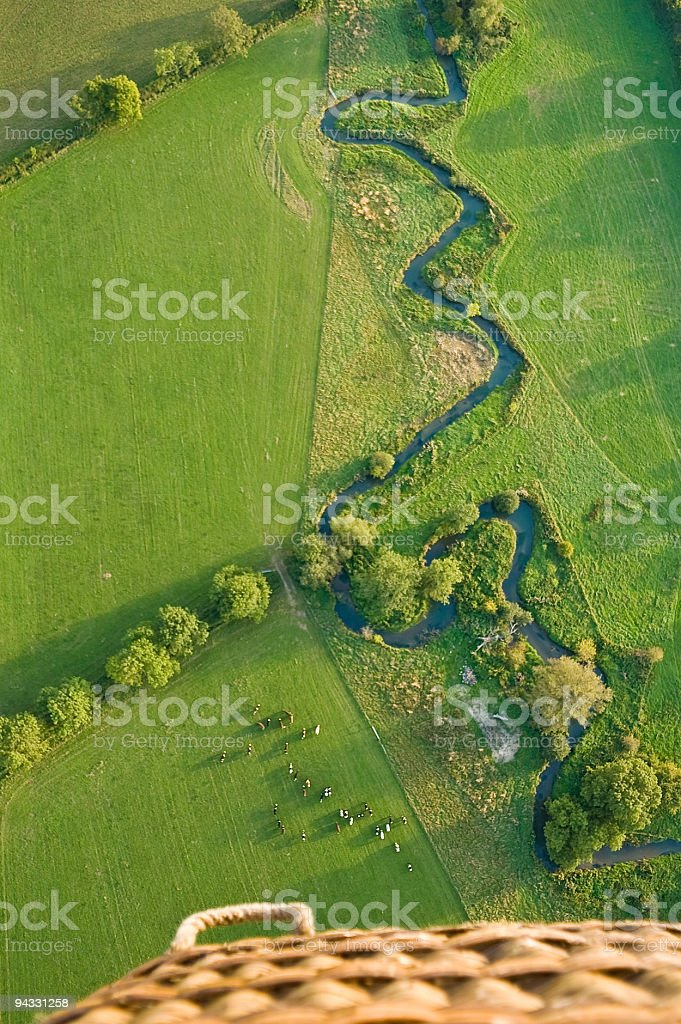 Meandering river, cattle, balloon stock photo