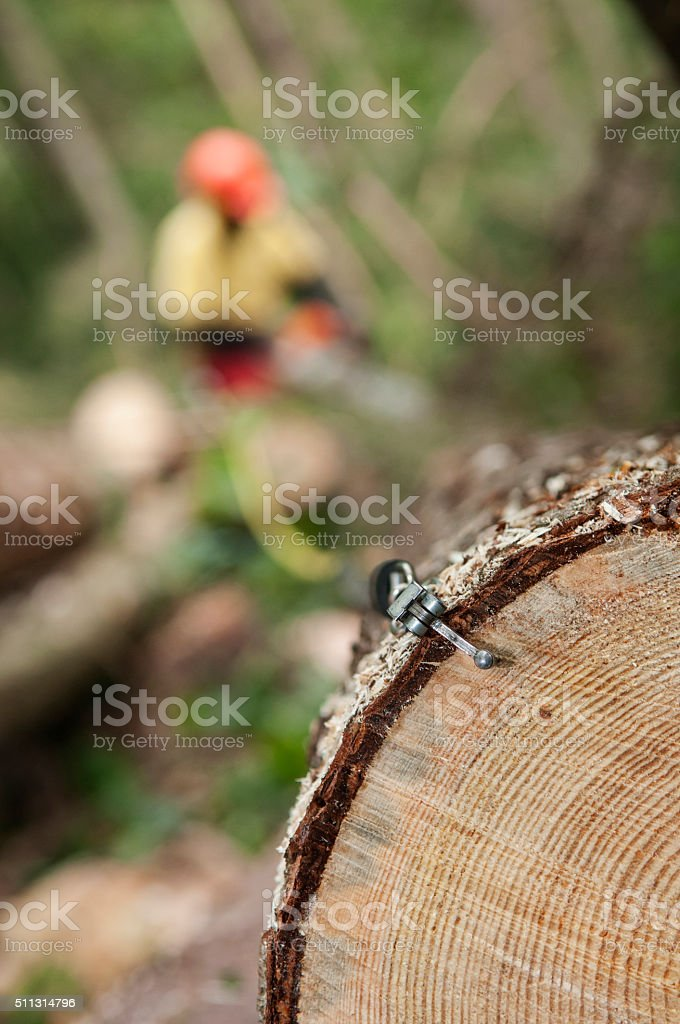 Measuring lumber stock photo