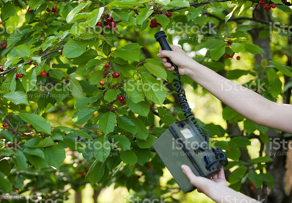 Measuring radiation levels of fruits stock photo